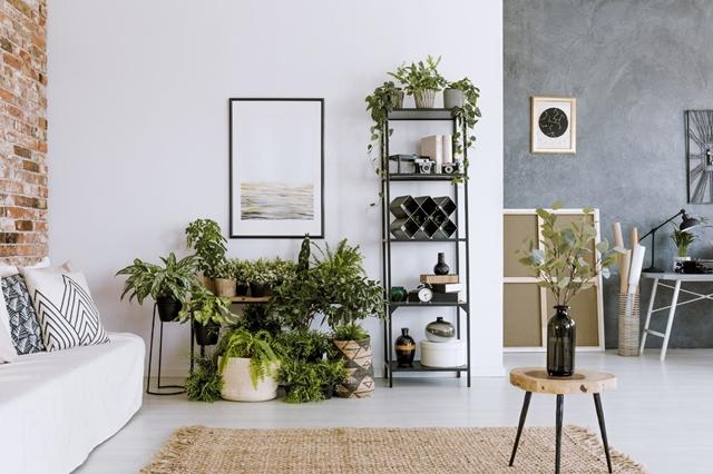 Como decorar a sala com plantas